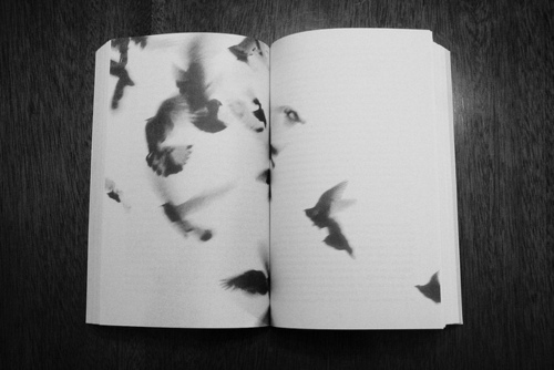 FOR+CCW+birds+in+book+tumblr