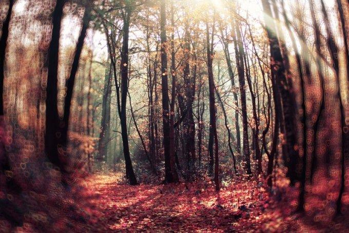 magic_forest__by_lentilcia-d4p1ouk