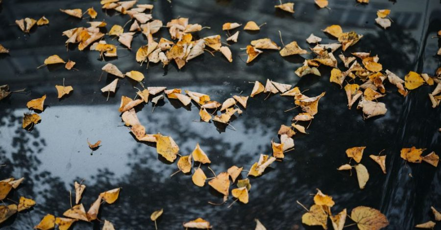 Love heart autumn leaves