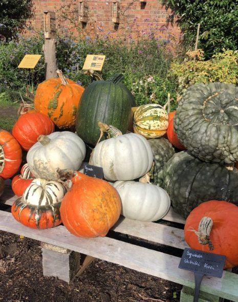 Pumpkins at Kew Gardens