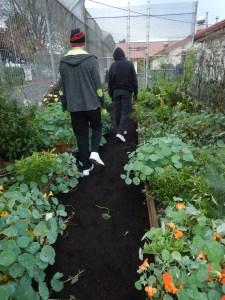 Tillamook Gardening