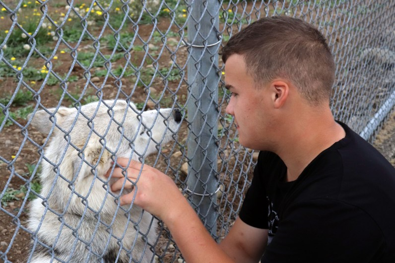 A youth pets the dog through the fence.