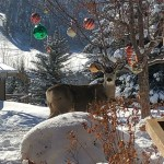 Deer at home in park city Utah