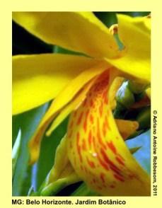 adrianoantoine_mg_bh_jardim_botanico_0001