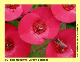 adrianoantoine_mg_bh_jardim_botanico_0005