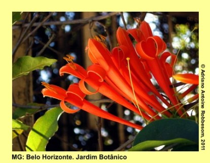 adrianoantoine_mg_bh_jardim_botanico_0012