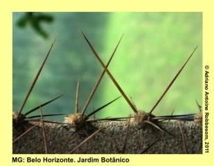 adrianoantoine_mg_bh_jardim_botanico_0016