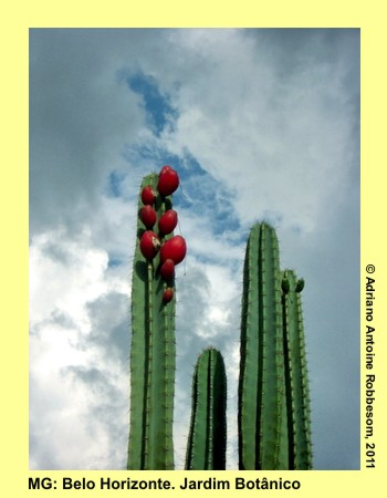 adrianoantoine_mg_bh_jardim_botanico_0017