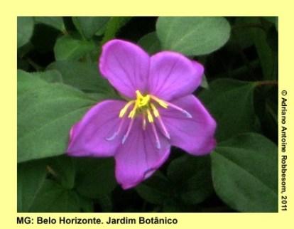 adrianoantoine_mg_bh_jardim_botanico_0021