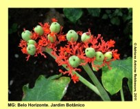adrianoantoine_mg_bh_jardim_botanico_0022