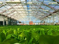 Gotham Greens – Fresh from your rooftop