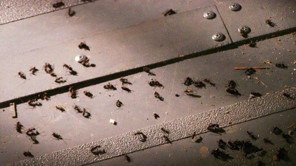Air India flight delayed after swarm of ants found in business class