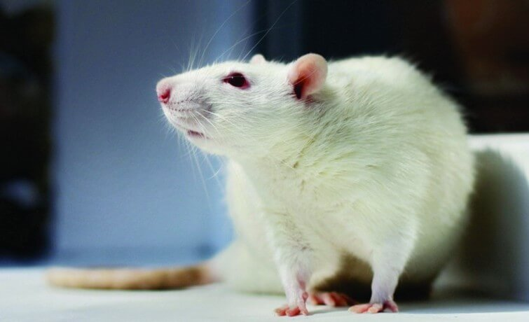 Using Touchscreen Operant Systems to Study Cognitive Behaviors in Rodents