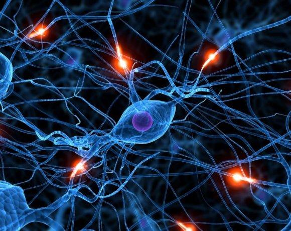 WEBINAR SERIES – Recording Neuronal Activity in Animal Models