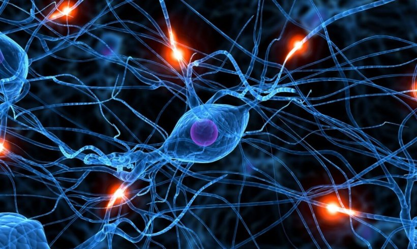 WEBINAR SERIES – Recording Neuronal Activity in Animal Models