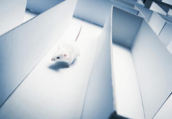 Animal Behavior Video Tracking Using ANY-maze Software
