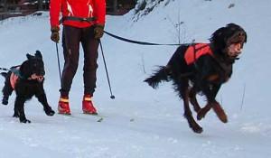 Hund i skiløypa