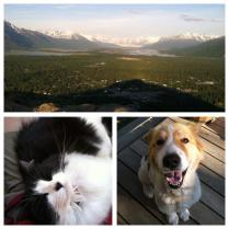 AK, my cat and dog, Noni and Charlie