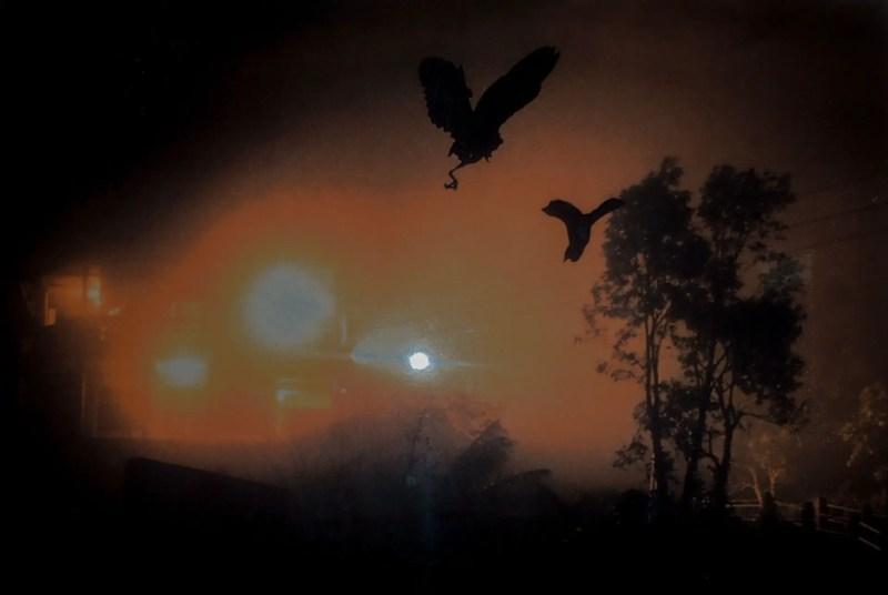 Birds Jatinga