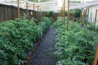 Inside Urban Green: Sub-irrigated Planters (SIPs): A ...