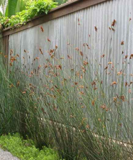 59 DIY Backyard Privacy Fence Design Ideas on A Budget