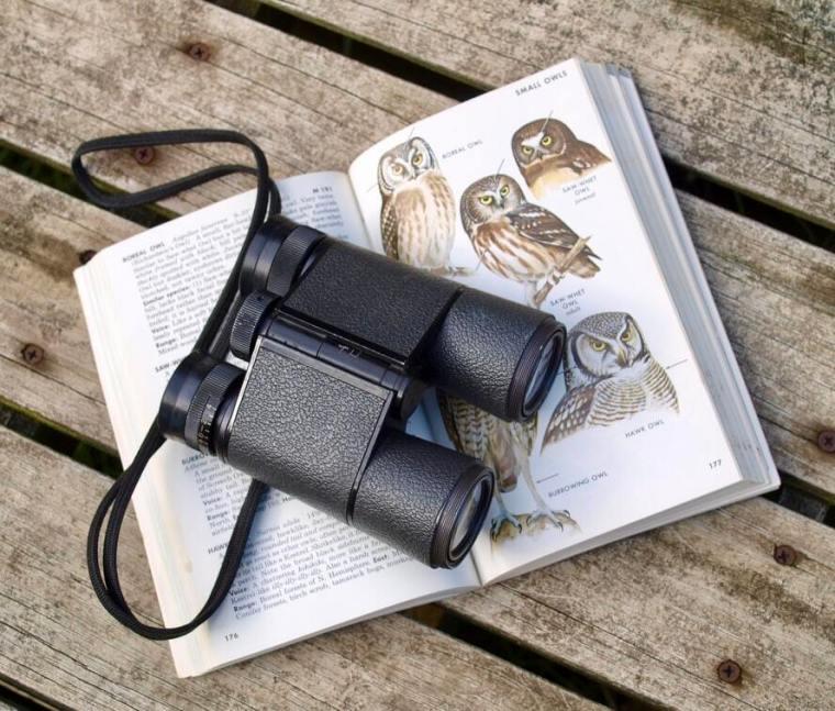 птици Преразглеждане на градската среда