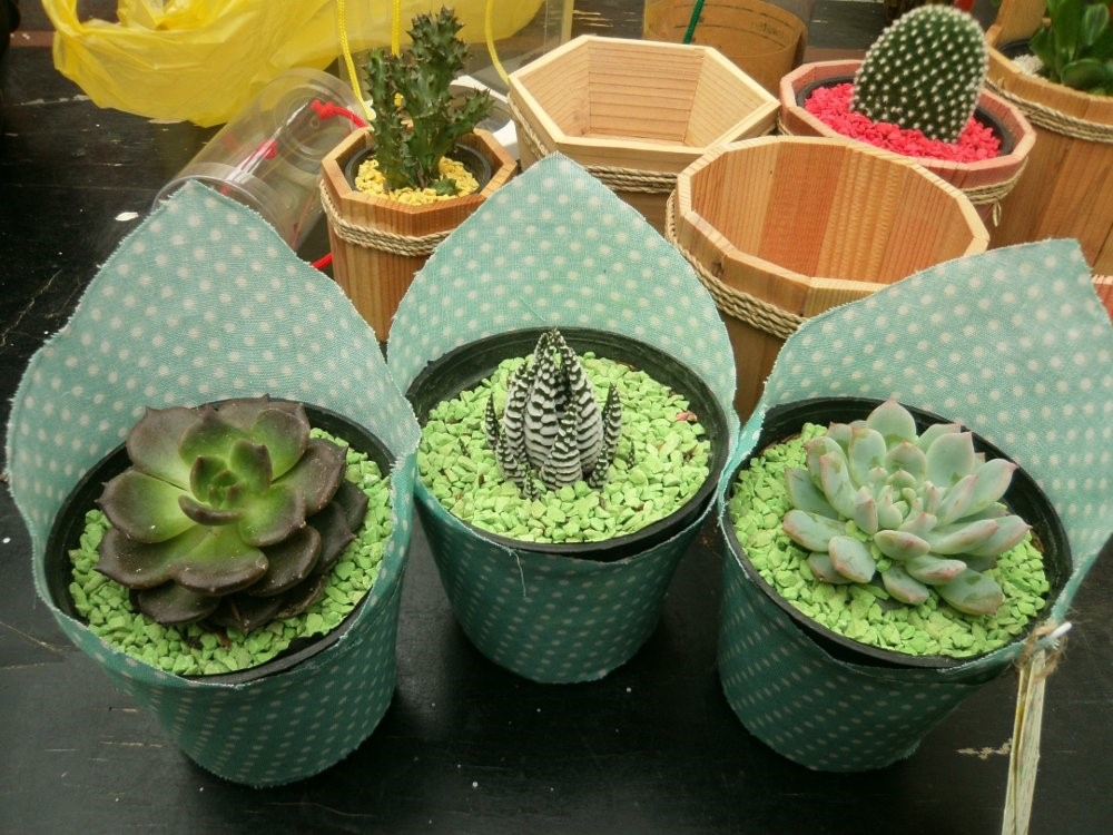 tanaman hias Year End Gift