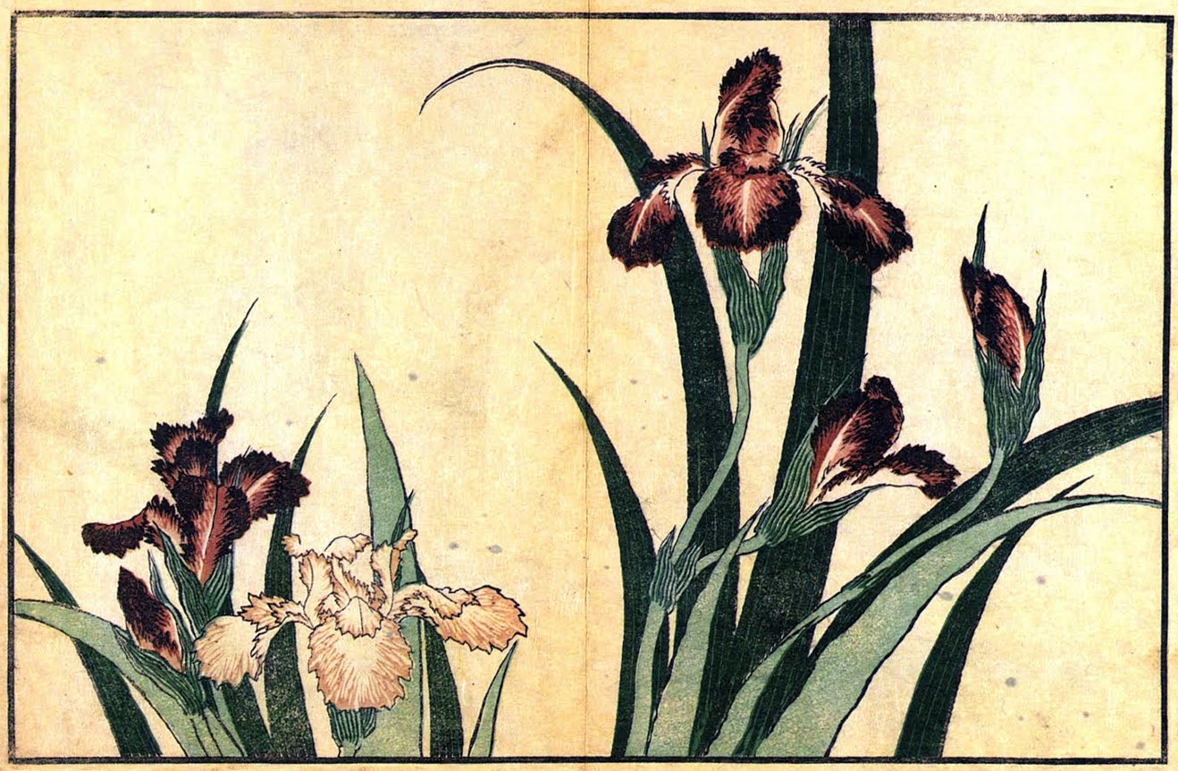 Hokusai-Irises, flowers, joy, nature