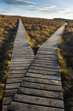 a boardwalk splitting into two diverging paths