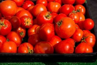 tomatoes-RED-20140215_2690