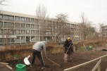 In between the oblong buildings in Gellerupparken, inhabitants work on small garden plots and await for their labor to grow into vegetables ready for use.
