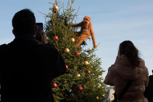 Imagen 002 Iceland orangutan robot