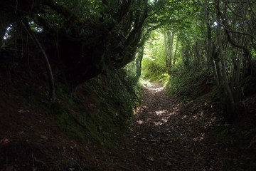 Forest path that is dark in the foreground and light at the end of the path