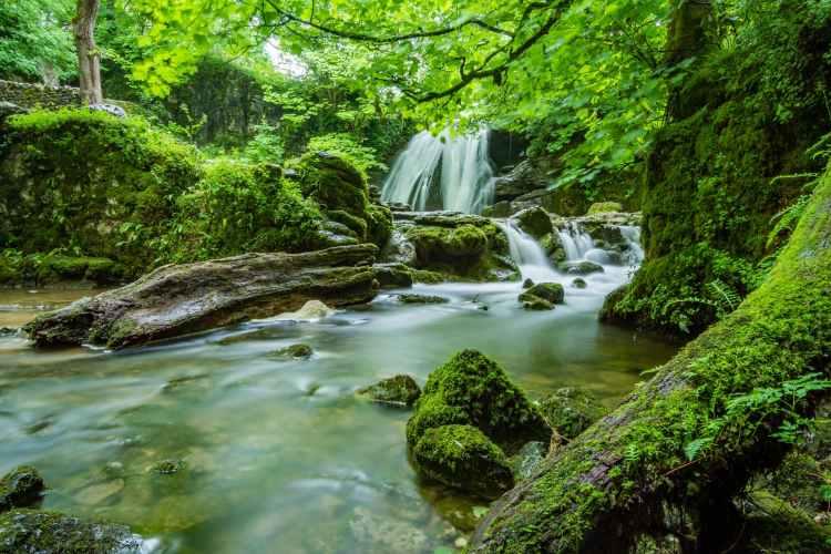 cascade creek environment fern