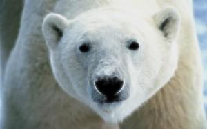 Insights from a Bipolar Bear