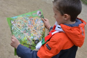 boy looking at a map of a zoo