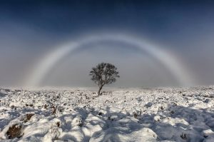 stunning pure white rainbow arching over snow and a winter tree