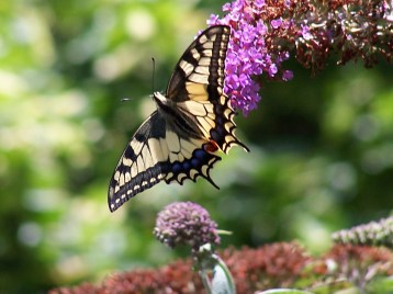 Le Clos de la Risle- Serre aux Papillons