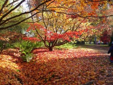 Arboretum d'Harcourt - www.harcourt-normandie.fr