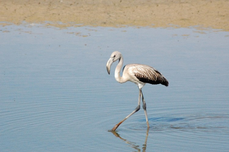 One of Spain's National Parks, Doñana National Park, has the highest biodviersity in Europe