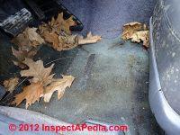 How To Remove Black Mold From Car Carpet - Carpet Vidalondon