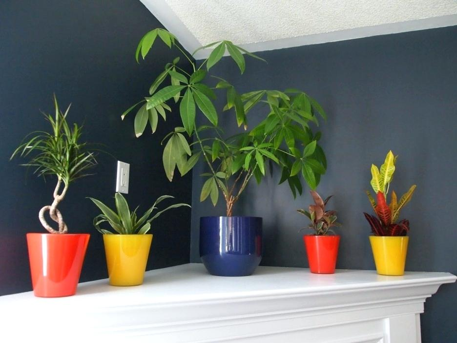 minimalist indoor plants