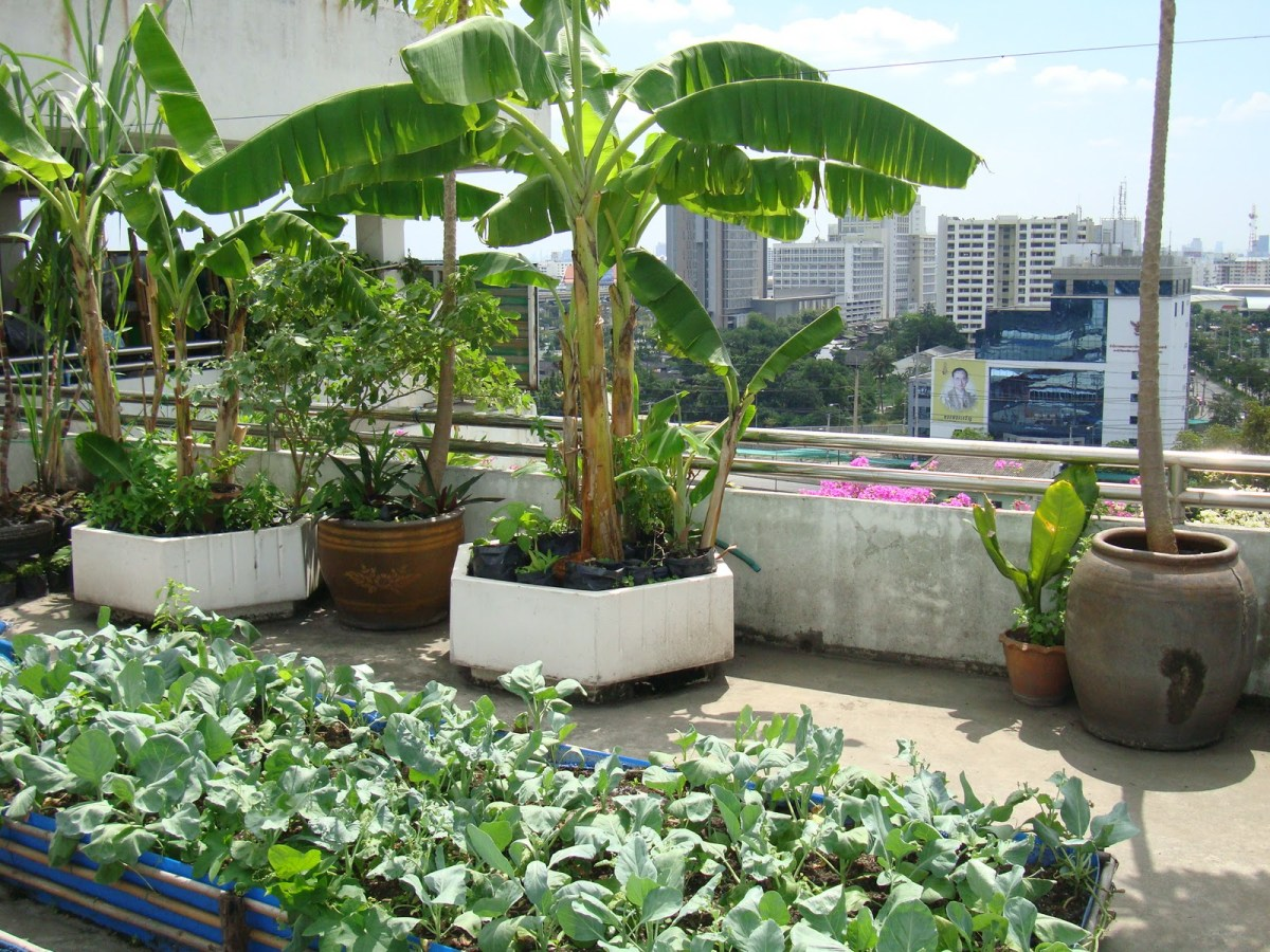 roof garden with pot