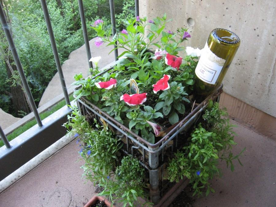 Pot Plant Indoor