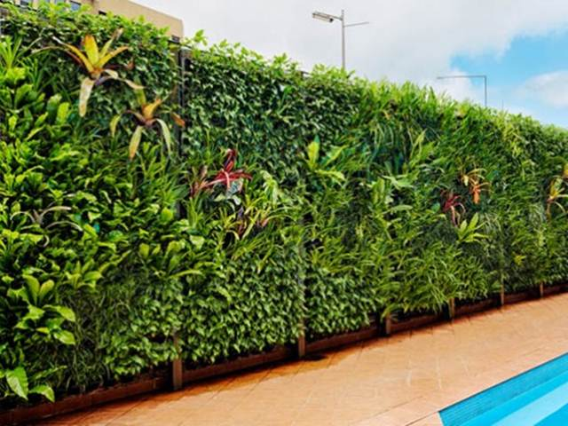 Vertical Garden Near Swimming Pool Design