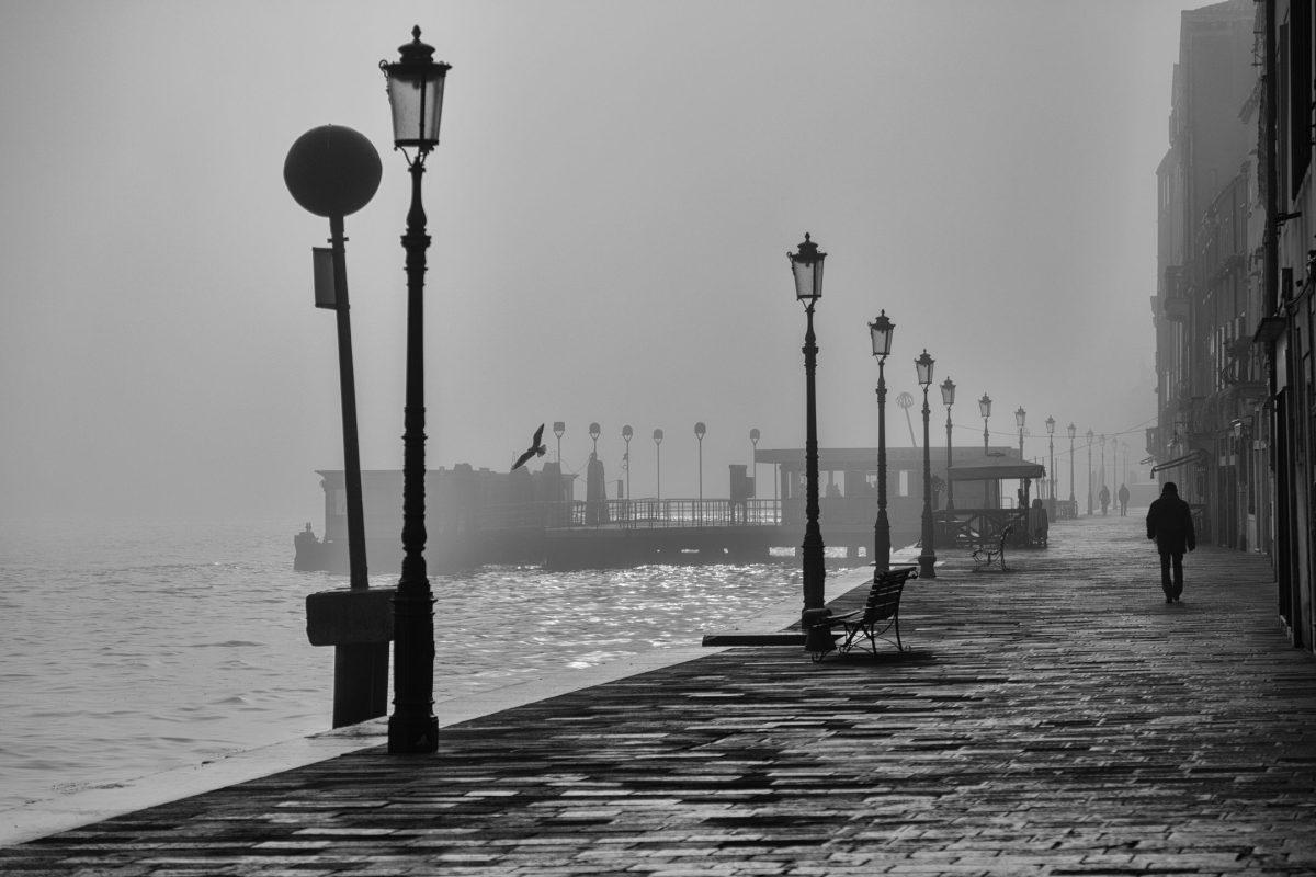 sea water silhouette bird light black