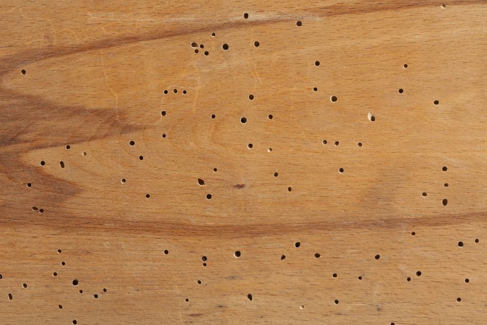 termite holes wood check
