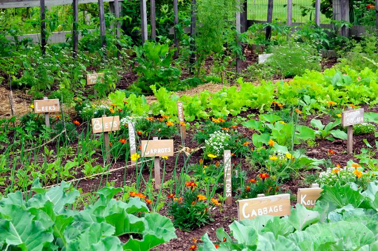 vegetable garden with layout