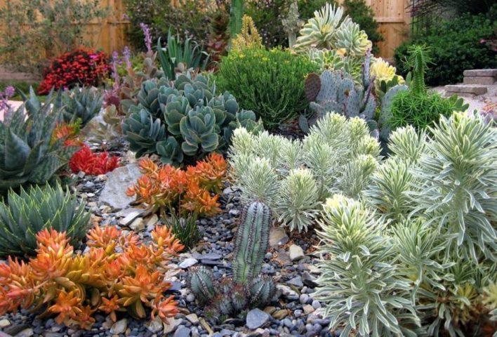 indoor and outdoor succulent garden