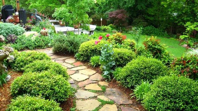 best shrubs for garden pathway